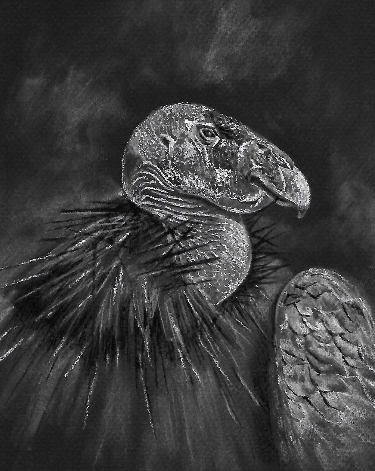 Condor, by Susan Underkoffler, 2020